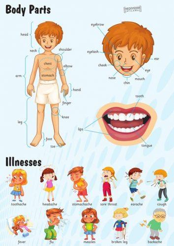orta_poster_body_parts_illnesses