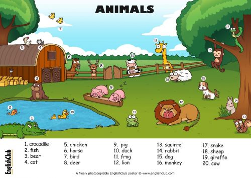 englishclub-poster-animals-A3